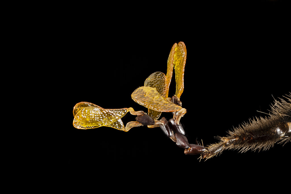 Virginia Tech Insect Collection | College of Agriculture and